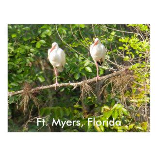Groeten van Florida! Briefkaart