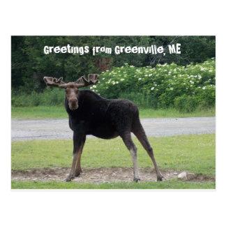 Groeten van Greenville 1 Briefkaart