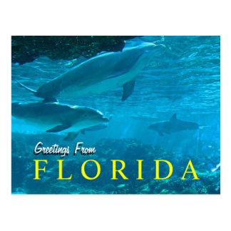 Groeten van het briefkaart van Florida
