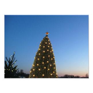 Grote en Kleine Kerstbomen I Vakantie in Fotografische Afdruk