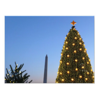 Grote en Kleine Kerstbomen II Vakantie in Foto Afdruk