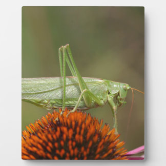 Grote Groene Bush-Veenmol (viridissima Tettigonia) Fotoplaat