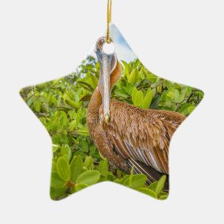 Grote Pelikaan bij Boom, de Galapagos, Ecuador Keramisch Ster Ornament