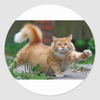 Grote Vette Oranje Kat Ronde Sticker