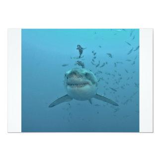 Grote Witte Haai Isla Guadalupe Kaart