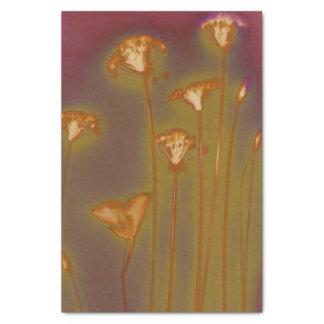 H.A.S. Het papieren zakdoekje van kunsten, Lough Tissuepapier