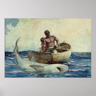 Haai die, 1885 vissen poster