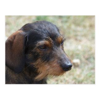 Haired Hond Daschund van de draad Briefkaart