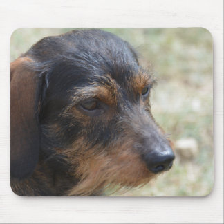 Haired Hond Daschund van de draad Muismat