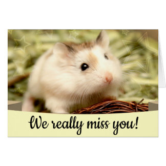Hammyville - Leuke Hamster Briefkaarten 0