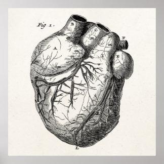 Harten van de Anatomie van het vintage Hart 1800s Poster