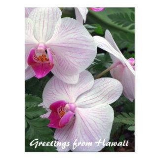 Hawaiiaanse orchideeën briefkaart