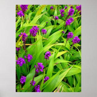 Hawaiiaanse Orchideeën Poster