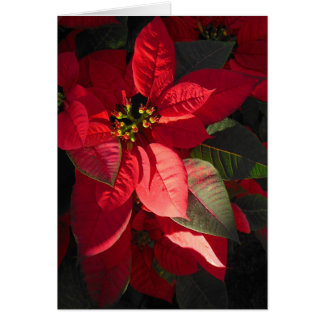 Hawaiiaanse Poinsettia Kaart