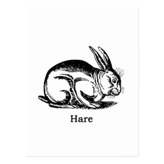 Hazen (konijn) briefkaart