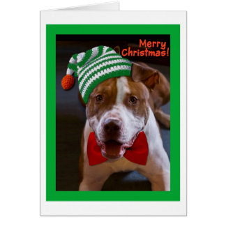 Heb Kerstmis van de Stier van de Kuil Briefkaarten 0