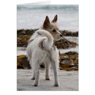 Hefboom Russell Terrier Mix - Winnie - Oman Briefkaarten 0