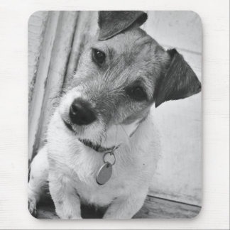 Hefboom Russell Terrier Muismatten