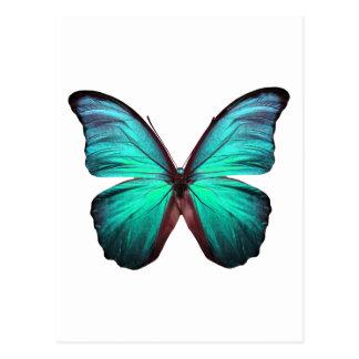 Heldere Blauwgroen Vlinder Briefkaart