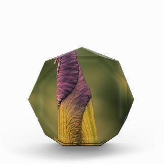 heldere bloemknop prijs