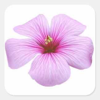 Heldere Roze Bloem Vierkante Stickers