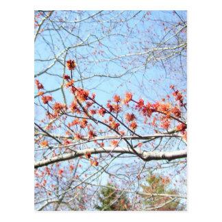 Herfst bij de 3de Acre van Naturen Briefkaart