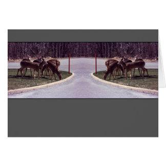 Herten die - Kaart kruisen
