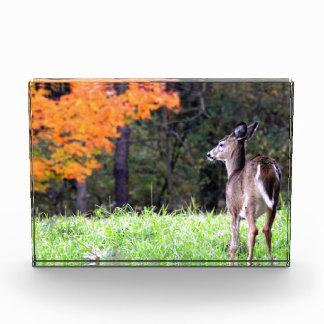 Herten in Versie 2 van het Gebied van de Herfst Acryl Prijs