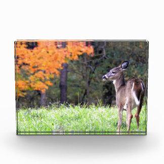 Herten op het Gebied van de Herfst Acryl Prijs