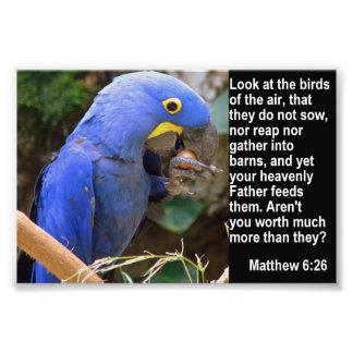 Het 6:26 van Matthew met Blauwe Ara Foto Afdruk