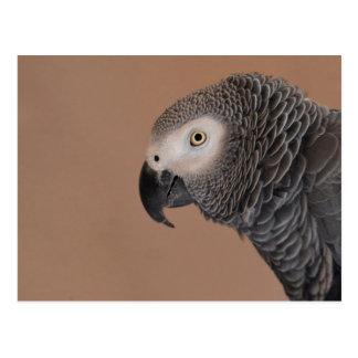 Het Afrikaanse Grijze Briefkaart van de Papegaai