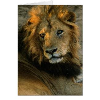 Het Afrikaanse Portret van de Leeuw Wenskaart