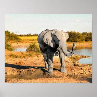 Het Afrikaanse Poster van de Olifant