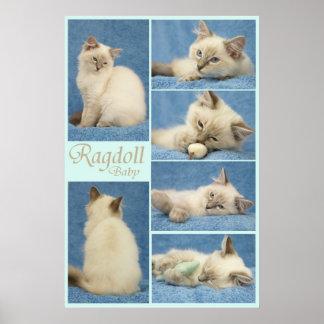 Het babyposter van Ragdoll Poster