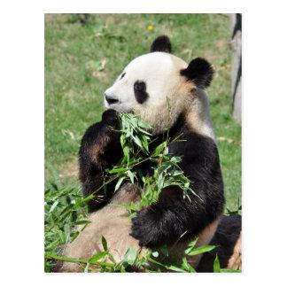 Het Bamboe van Yum! Het Briefkaart van de panda