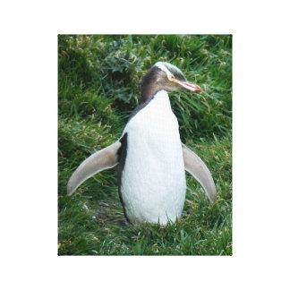 Het bedreigde Gele Eyed Canvas van de Pinguïn