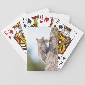 Het bekijken u! De Speelkaarten van de eekhoorn