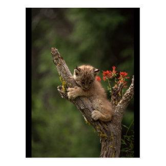 Het Beklimmen van de Lynx van het baby Briefkaart