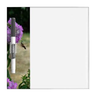 Het berichtraad van de kolibrie dry erase whiteboards