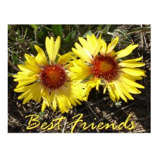 Het beste Briefkaart van de Bloemen van Colorado