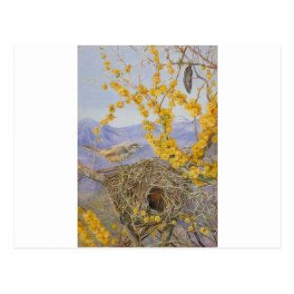 Het bewapende Nest van de Vogel in Acacia Bush, Briefkaart