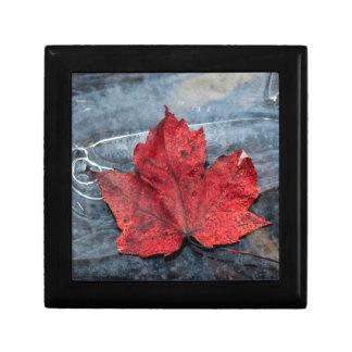 Het blad van de esdoorn op ijs decoratiedoosje