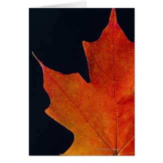 Het blad van de Esdoorn van de herfst op zwarte Briefkaarten 0