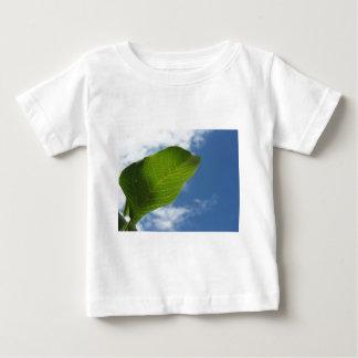 Het blad van de okkernoot door zonlicht tegen de baby t shirts