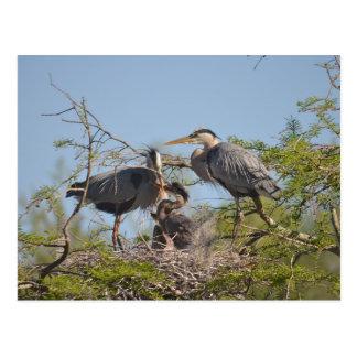 Het blauwe Briefkaart van de Foto van het Nest van