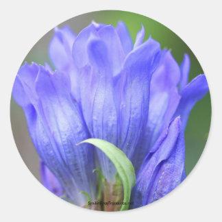 Het blauwe Etiket van de Sticker van de Foto van