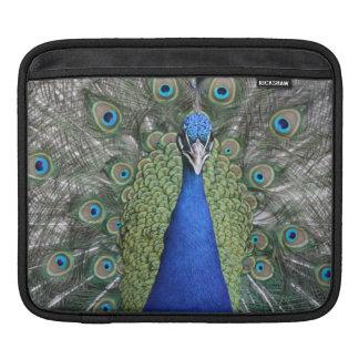 Het blauwe Portret van de Pauw Beschermhoes Voor iPad