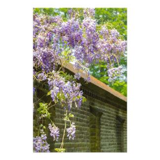 Het bloeien het blauwe wisteria hangen over lange briefpapier