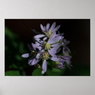 Het BloemenPoster Wildflower van paarse Asters van Poster