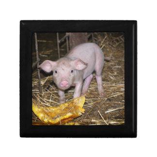 Het boerderij van Piggy Decoratiedoosje